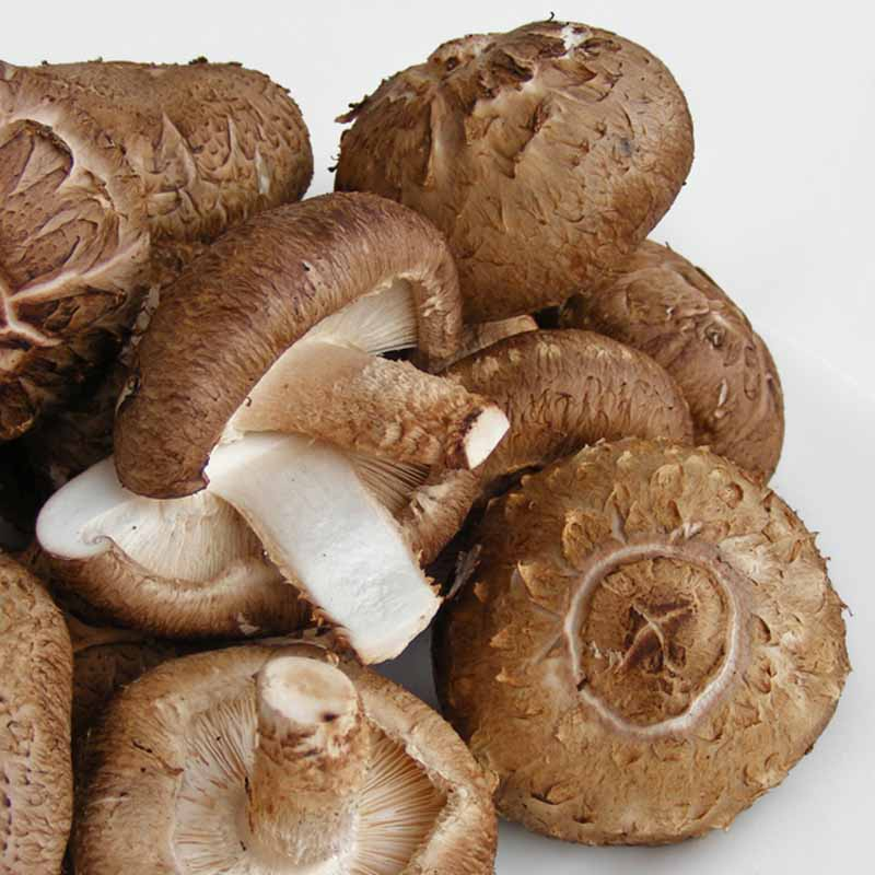 Beta 1, 3 Glucan | Shitake Mushrooms | Skin Care Key Ingredient