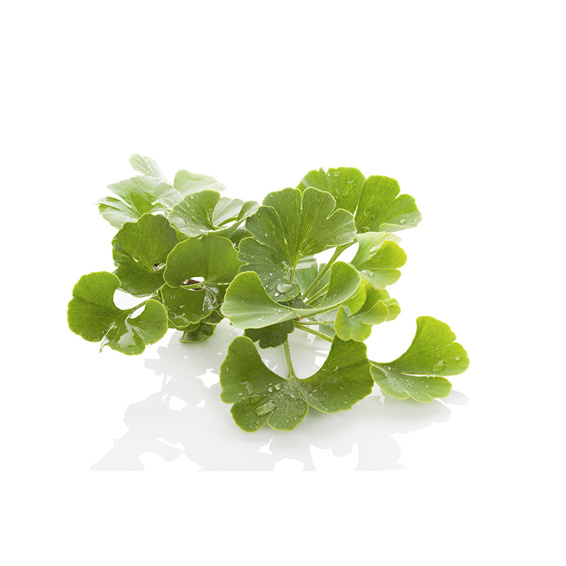 Ginkgo Biloba Leaf Extract | Skin Care Key Ingredient