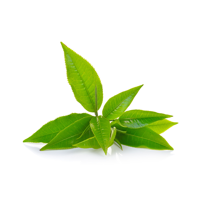 Green Tea Extract | Green Tea Leaves | Skin Care Key Ingredient