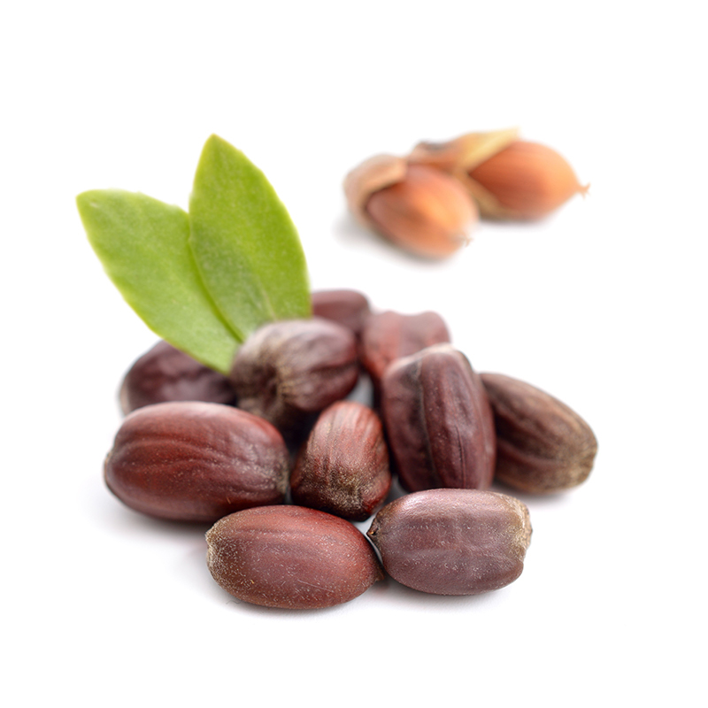 Jojoba | Simmondsia Chinensis Seed Oil | Skin Care Key Ingredient