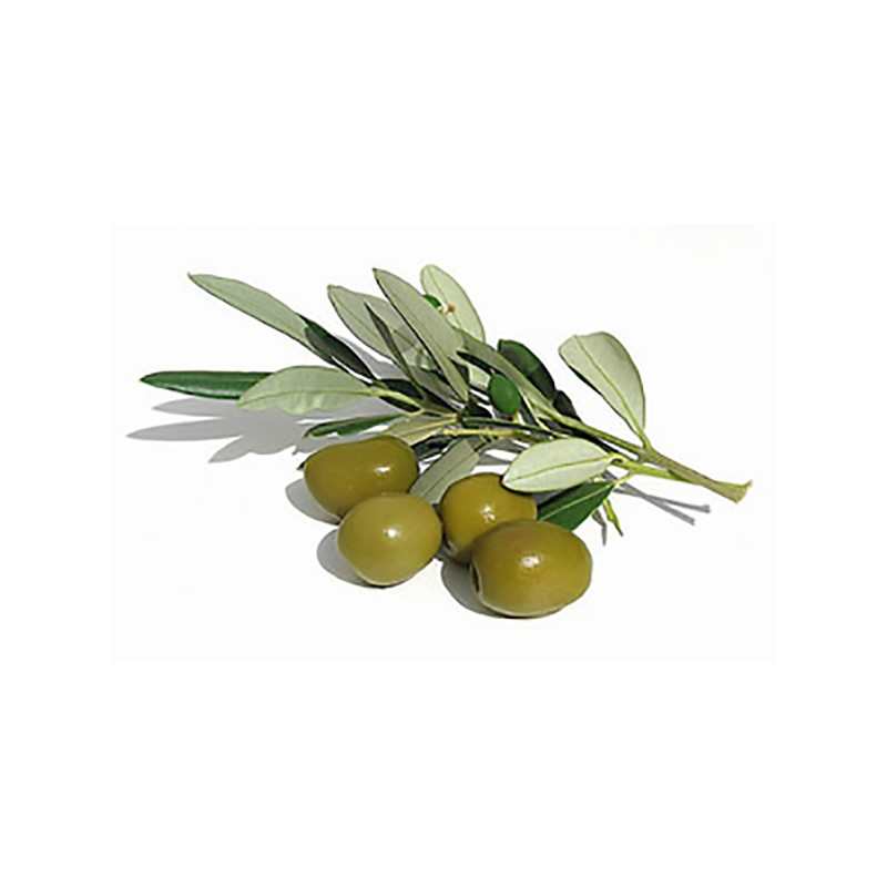 Squalene | Olive Branch | Skin Care Key Ingredient