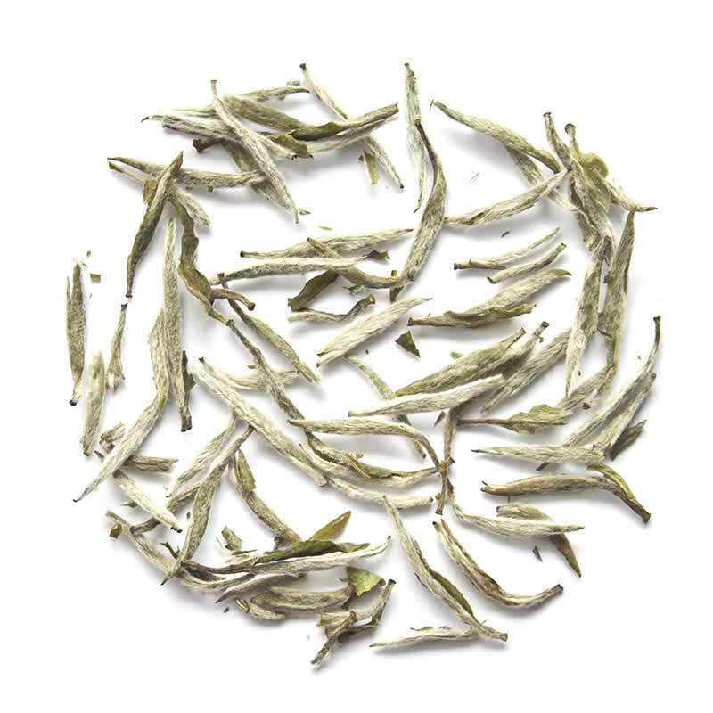 White Tea Leaf Extract   Camellia Sinesis Extract   Skin Care Key Ingredient
